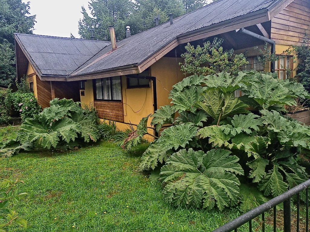 Nalca en casa particular de Aysen, Chile