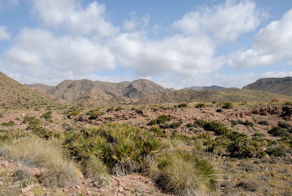 Area de la Araña lobo en Cabo de Gata Almería, España